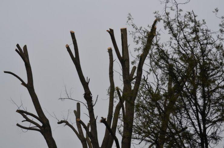 """Kereskenyi Gabor: """"Somăm Primăria să oprească distrugerea copacilor din oraș!"""""""
