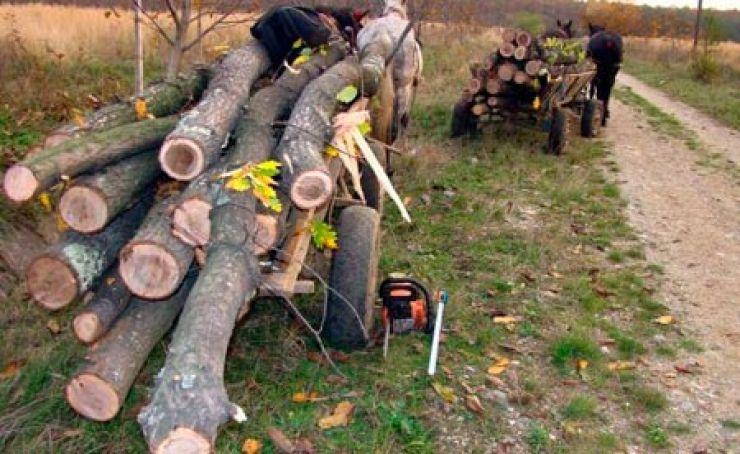 Doi tineri au furat material lemnos din pădure