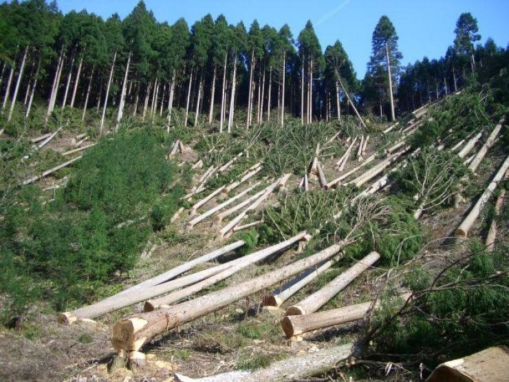 Prefectura Satu Mare: Dosar penal în cazul tăierilor ilegale de păduri în Rezervaţia Naturală Râul Tur