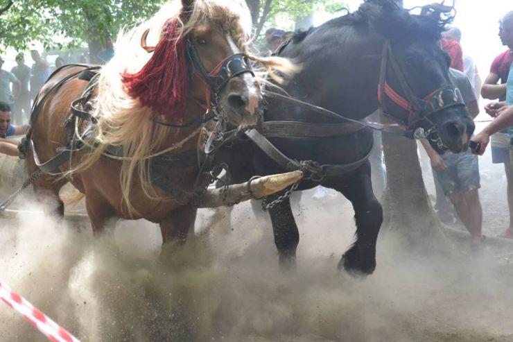 Premieră | Concurs de tracțiune şi frumuseţe cabalină, la Valea Măriei