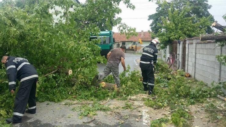 Furtuna a doborât cinci copaci, un stâlp și a luat pe sus un acoperiș