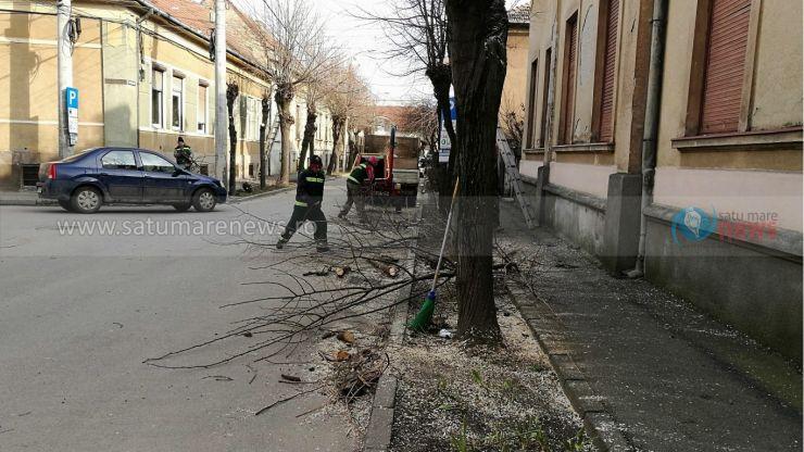 A început toaletarea copacilor în Satu Mare