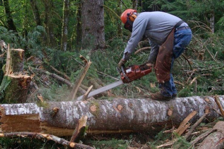 """Prefectul Eugeniu Avram: """"Voi dezlega câinii pentru că fenomenul tăierilor ilegale de arbori trebuie stopat"""" (foto)"""