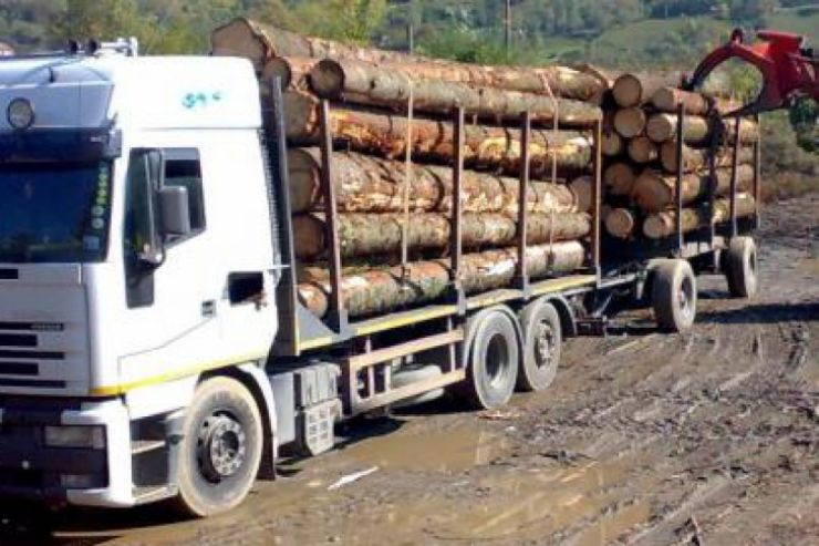 Amendă de 5.000 lei pentru furt de lemne
