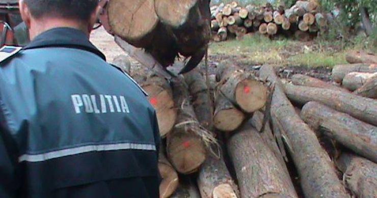 Prinși în flagrant la furat de lemne
