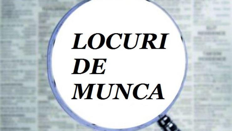 Peste 1.000 locuri de muncă vacante în județul Satu Mare