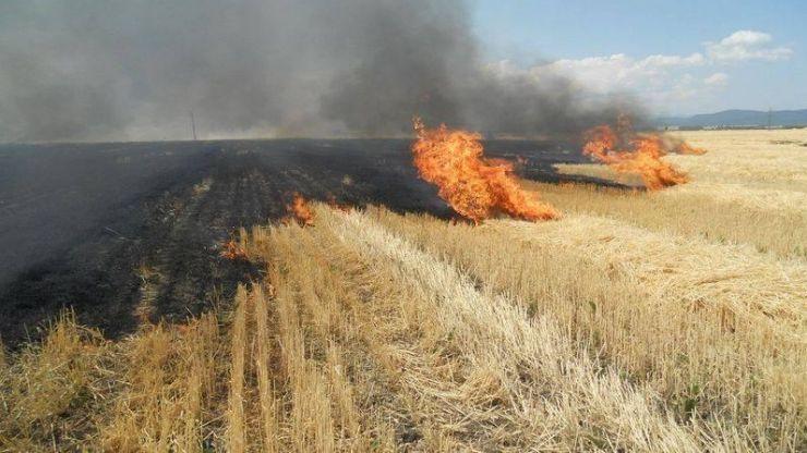 Incendiu de vegetație pe Drumul Careiului. Intervin pompierii