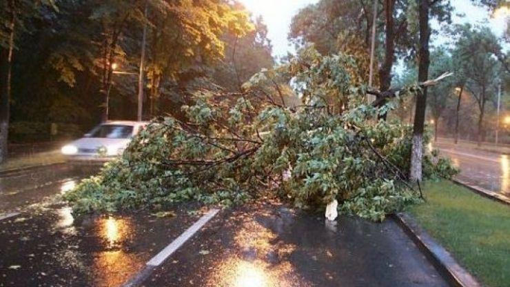 Cinci localități din județul Satu Mare, afectate de vântul puternic