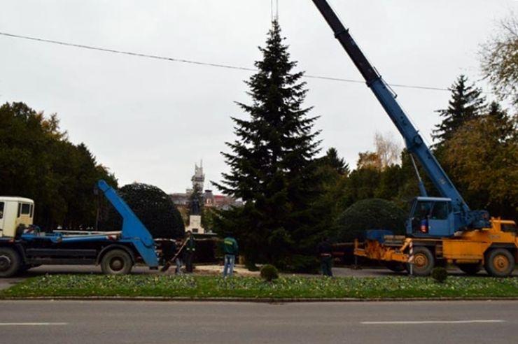 Bradul de Crăciun din municipiul Satu Mare, donat de un sătmărean