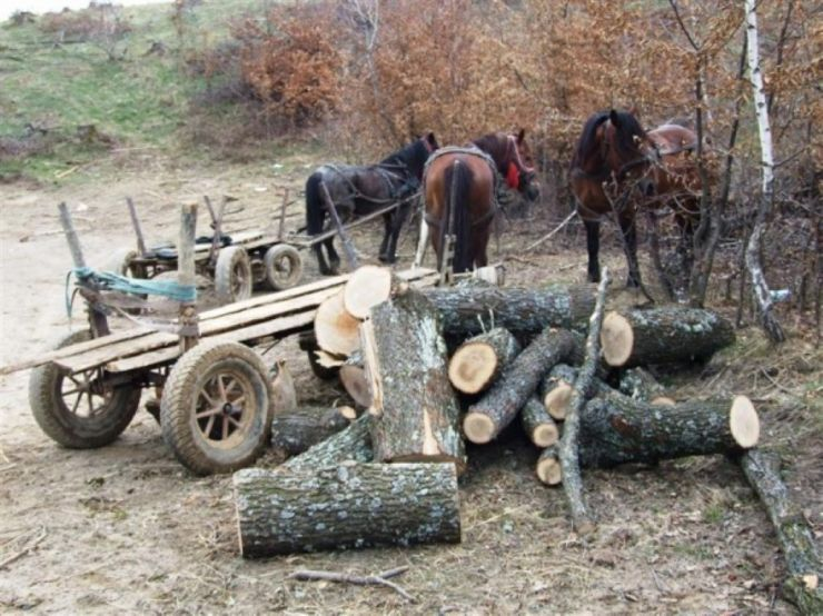 Hoți de lemne prinși de oamenii legii