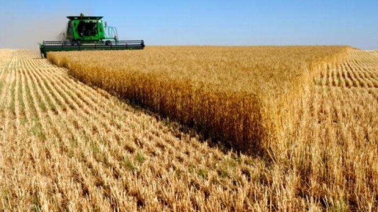 Satu Mare a obținut în 2018 o recoltă record de grâu