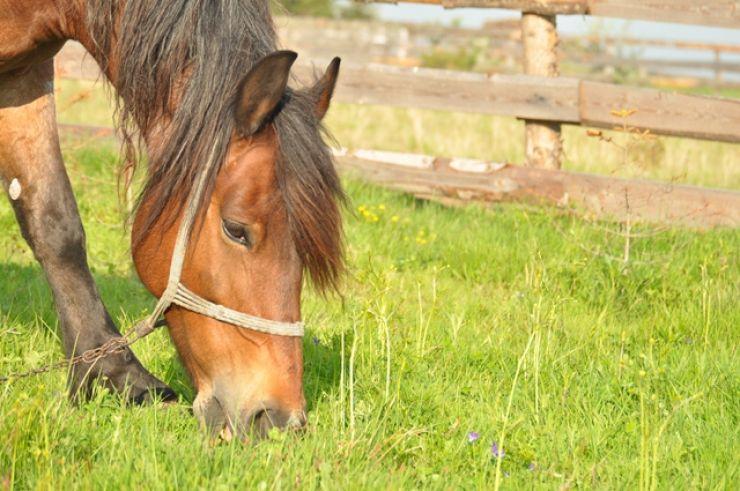I-a furat calul din grajd