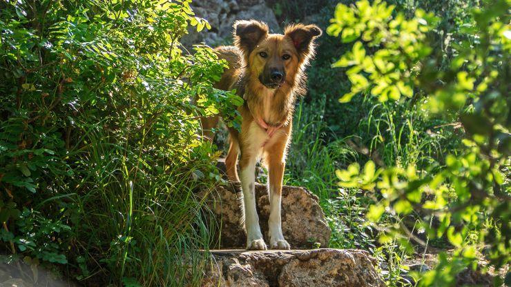 Asociația FreeLife a capturat de pe străzile municipiului 48 de câini fără stăpân