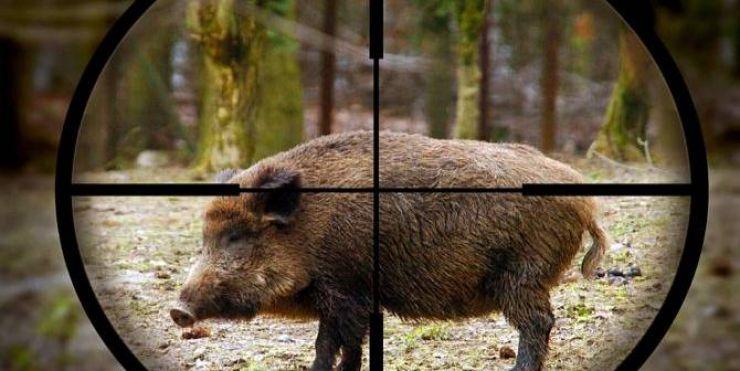 Pădurar ucis de un porc mistreţ
