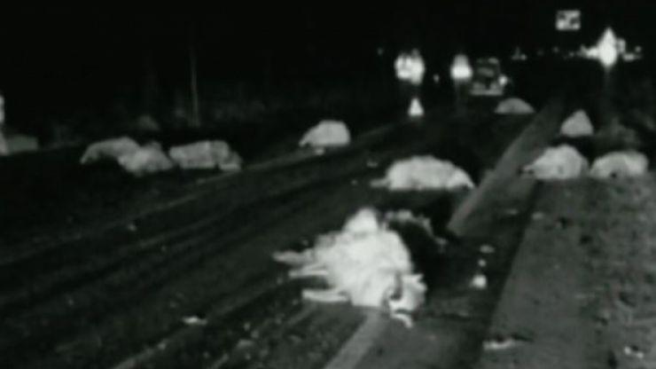 Măcel pe un drum din județ! Un grup de oi a fost spulberat de o mașină