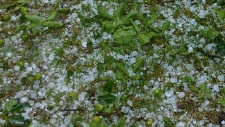 Culturile agricole din Țara Oașului, afectate de gheața căzută în această după-masă