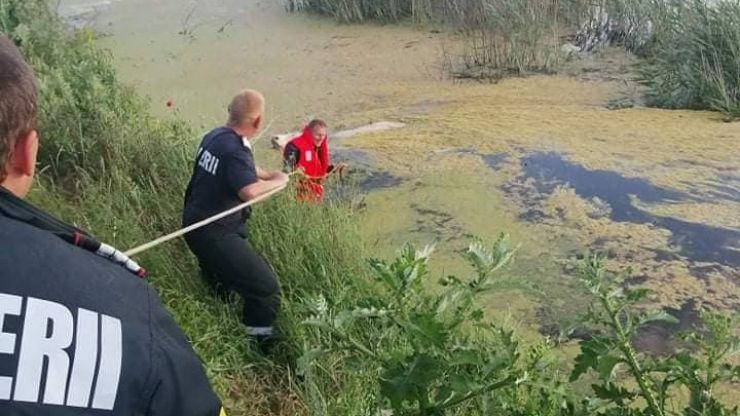 O vacă căzută într-un lac, salvată de pompieri