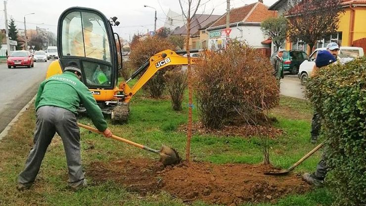 FOTO | Peste 1000 de arbori plantați în Satu Mare în această toamnă