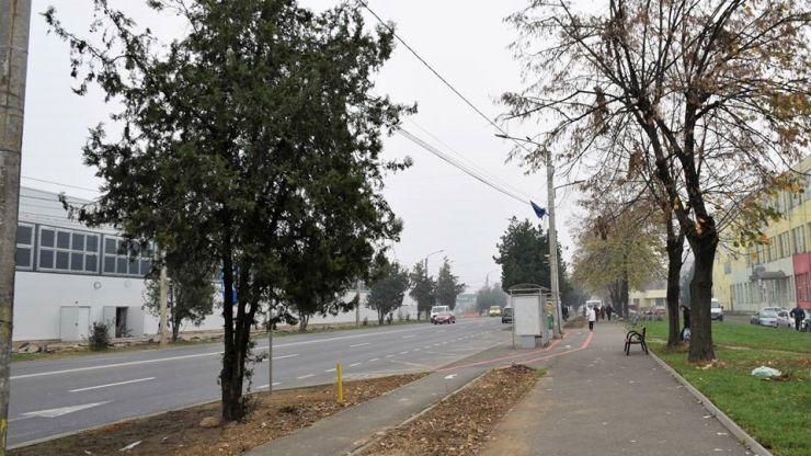 Zeci de copaci plantați pe Drumul Careiului