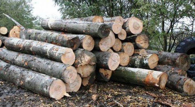 Polițiștii au confiscat peste 60 metri cubi de material lemnos, în urma unei razii