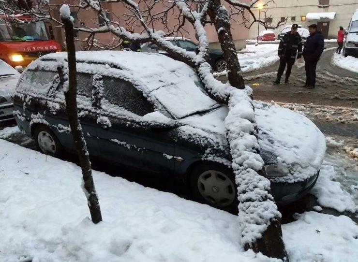 Copaci prăbuşiţi pe autoturisme, bilanţul primei ninsori din această iarnă în Satu Mare