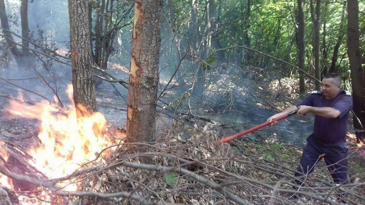 Incendiu de vegetație uscată pe dealul Tâmpa