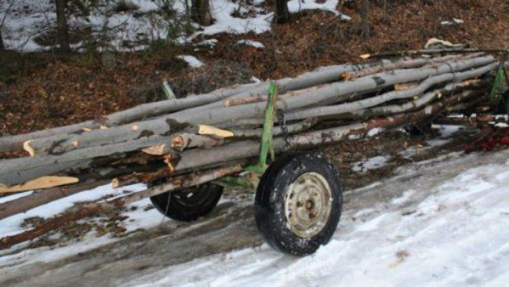 Trei bărbați din Tătărăști prinși cu lemne tăiate ilegal dintr-o fermă din Necopoi