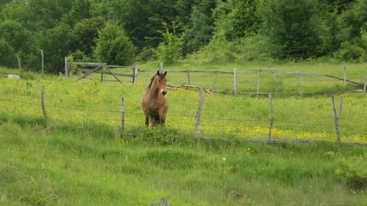 A furat un cal de pe câmp și l-a vândut unor persoane din județul Sălaj